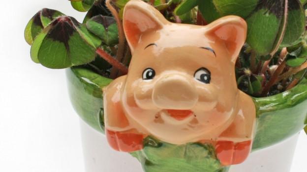 Schwein in Topf.
