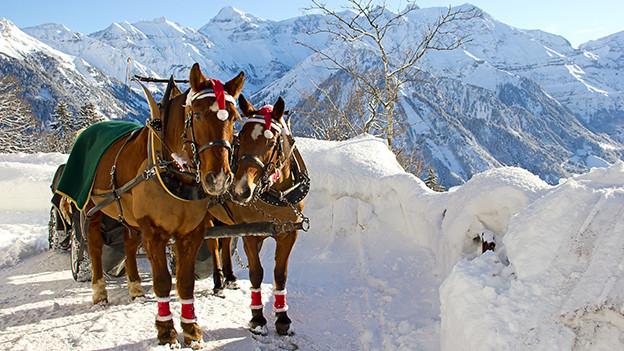 Pferdegespann in einer winterlichen Landschaft.