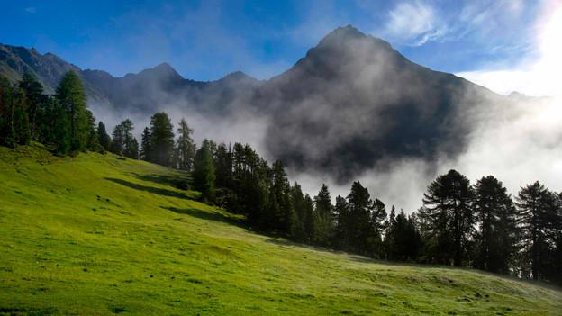Alpenwiese im Schweizerischen Nationalpark zwischen der Alp Grimmels und Il Fuorn,