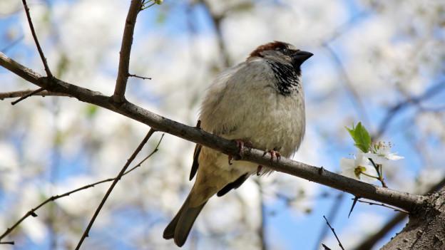 Ein Vogel sitzt auf einem Baumast.