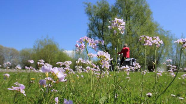 Blumen im Vordergrund und ein Velofahrer im Hintergrund.