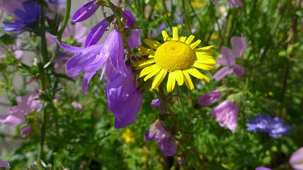 Violette und gelbe Blumen.