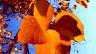 Herbstblätter unter sich: Fällst du zuerst oder ich?