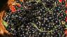 Schwarze Johannisbeere sind gesund
