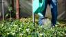 Was wollen Sie über Gartenarbeit wissen? Mailen Sie uns Ihre Inputs ins Studio.